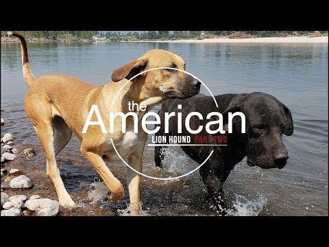 AMERICAN LION HOUND PART 2 (STREAMED INTERVIEW)