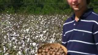 **Picking Up Elliot Pecans**++Best Pecans Planted++ @FL, LA & South TX++