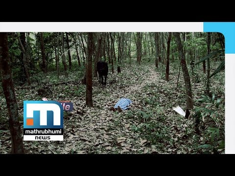Chalakkudi Vellikulangara Rosy Murder Case| Mathrubhumi Xfile Episode 15| Mathrubhumi News
