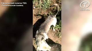 Питомник безнадзорных собак на полигоне ТБО в Ефремове