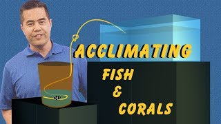 Acclimating Fish and Corals: How Drip Acclimation Ensures a Safe Transition Into Your Aquarium