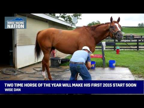Wise Dan - Interview with Charles LoPresti