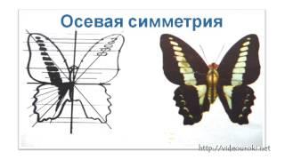 Рисование  по  представлению «Бабочка»