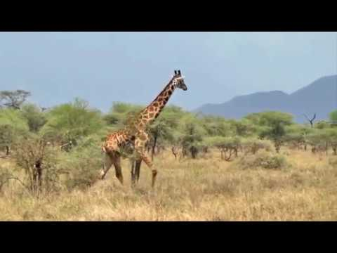 IKONA Wildlife Management Area Tanzania