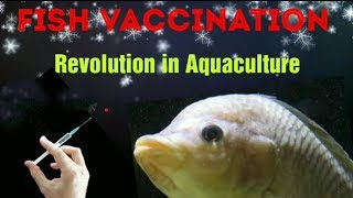 Fish Vaccination for sustainable Aquaculture