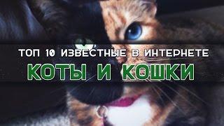 ТОП 10 популярных КОТОВ и КОШЕК! / ТОПы и ФАКТы от ArtManul