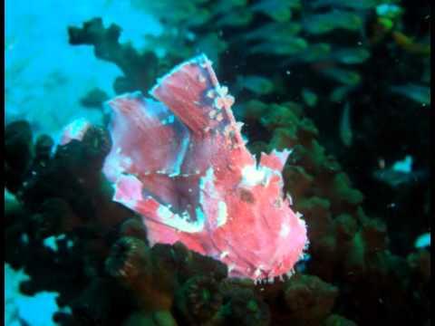 Mafia island big blu diving youtube - Dive center blu ...