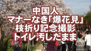 【中国人】マナーなき「爆花見」に波紋…大阪城公園に中国人大挙 枝折り...