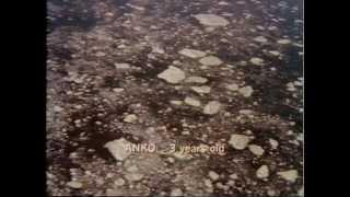 Antarctica.1983.ITA - Film Completo