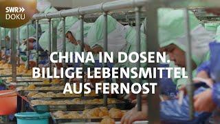Billige Lebensmittel aus Fernost - China in Dosen   SWR Doku