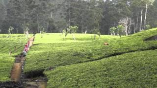 Sri Lanka, la perle de l