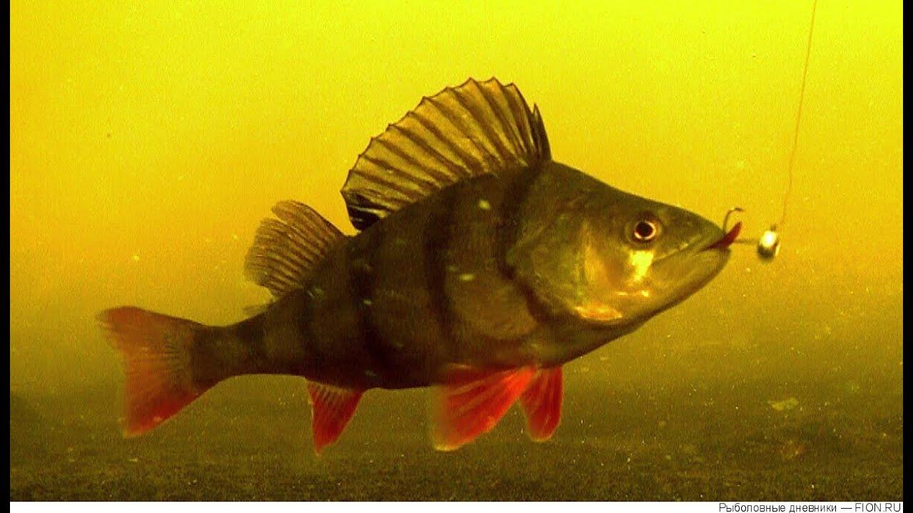 Подводная съемка рыбной ловли