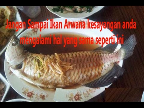 Ikan Arwana Seharga 40 juta di Masak Oleh Seorang Nenek ...