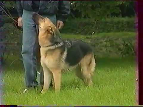 L' education d' un chien par son maitre (Partie 1)