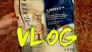 Кошачий VLOG: Пробуем различные корма, зависимость от dreamies, похудение
