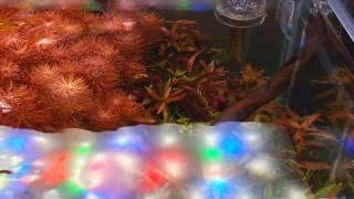 TWINSTAR LIGHT RGB-W - Intense red plants