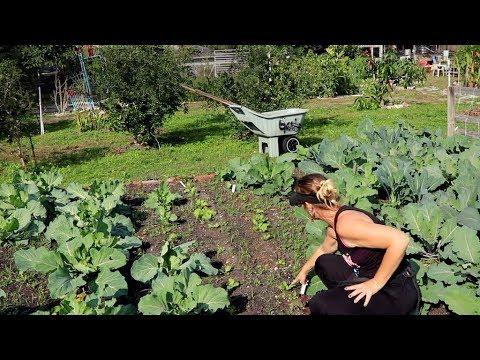 Urban Community Garden & Food Forest: A True Habitat For Humanity