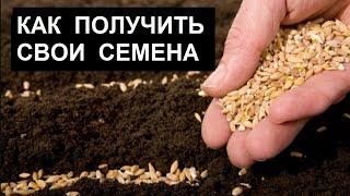 Как получить свои семена
