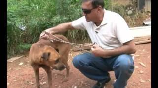 Repeat youtube video Resgate de Hulk - Um cão coberto por bicheiras na favela