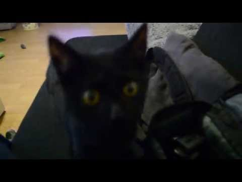 Panther mit Angriff auf die Kamera