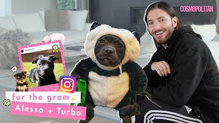 DJ Alesso Spills How His Dog Turbo Got Instagram Famous | Fur The Gram | Cosmopolitan