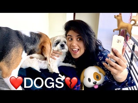 DOG LOVERS VS SO-CALLED DOG LOVERS   WHICH ONE ???