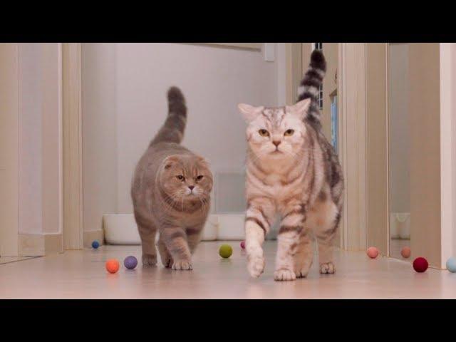 고양이는 밤에 뭐할까?  순둥이 이즈의 실체를 목격했다!