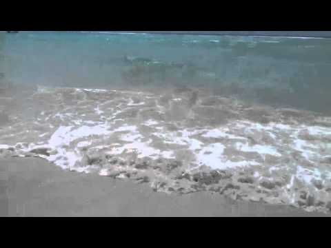 On the sea shore in Barbados (1 hr nature sounds)