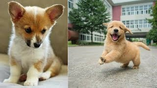 Ultimate FUNNY DOG Compilation | Cute Pets #8