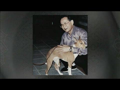 เปิดประวัติคุณทองแดง สุนัขทรงเลี้ยงตัวโปรดของในหลวง ร.๙
