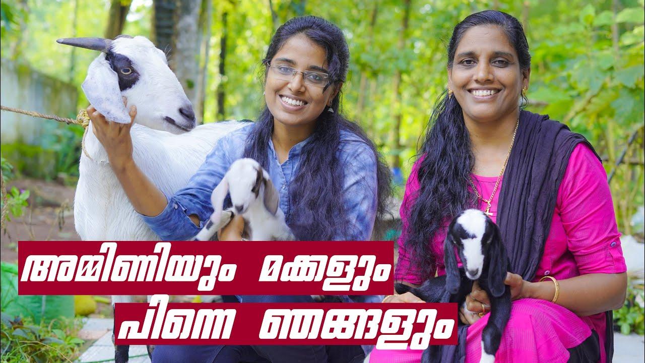 ആടിന്റെ പ്രസവ സംരക്ഷണം | Goat Farming Tips in Malayalam