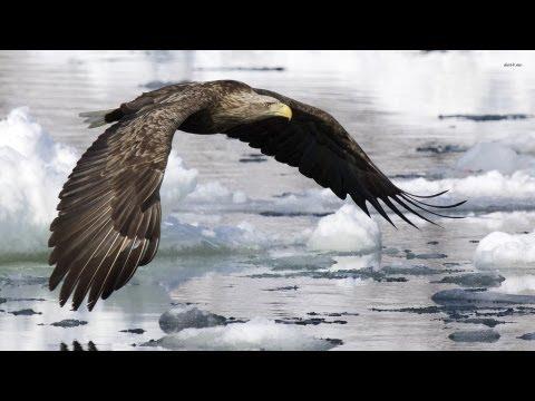 WHERE THE BALD EAGLE FLIES (Instrumental)