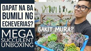 Ilang Succulents Ba Ang Kailangan Mo? Oras Na Ba Bumili Ulit? Mega Echeveria Unboxing