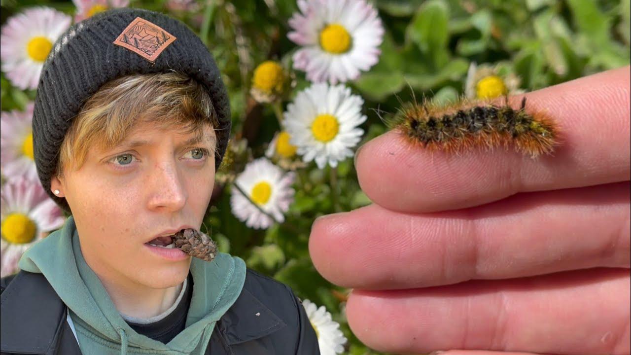 Cute Caterpillar Rescue #shorts
