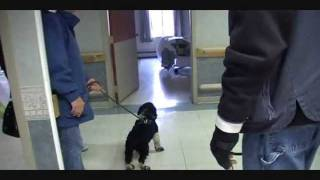 Veterans Service Dog Training Program,  Safe Landings - New Beginnings .wmv