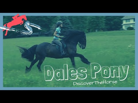 Riding A Dales Pony Named Lad! | DiscoverTheHorse [Episode #23]