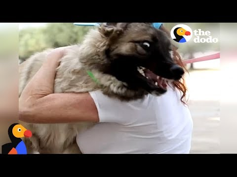 EXCITED Dog Reunites With Mom After Hurricane Harvey  | The Dodo