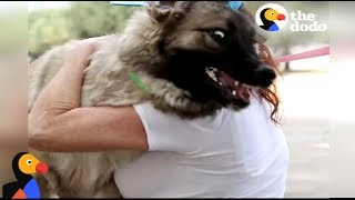 Guy Surprises Girlfriend With Puppy After Losing Her Dog | The Dodo