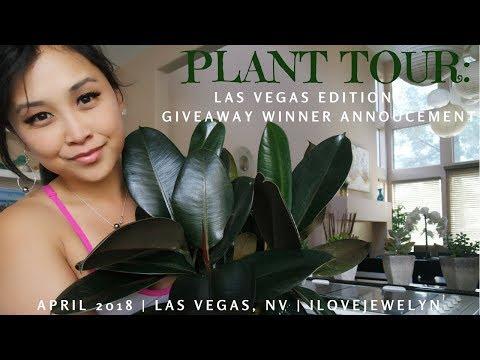Plant tour & update: Las Vegas edition + giveaway winner announcement | April 2018 | ILOVEJEWELYN