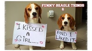 Funny BEAGLE Things! Why You Should Get A Beagle Dog. Episode #6