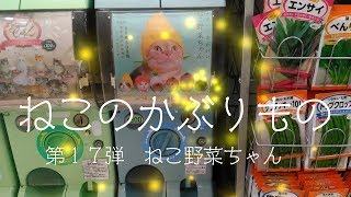 沖縄でたまにしか見かけない 幻の猫ガチャ! 何故か野菜の種の横に置か...
