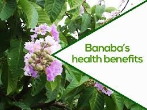 What are the Benefits of Banaba (Lagerstroemia Speciosa)