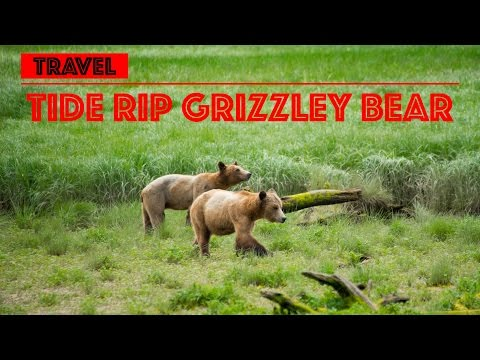 My Amazing TIDE RIP Grizzly Bear tours in Knight Inlet - BC Canada