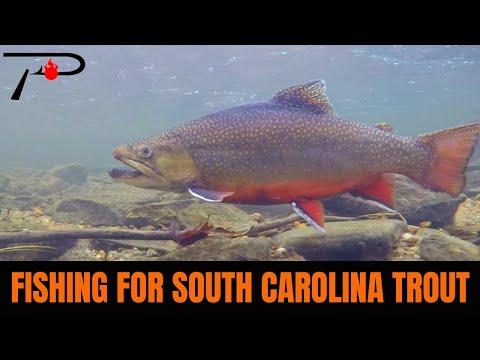 Trout Fishing South Carolina