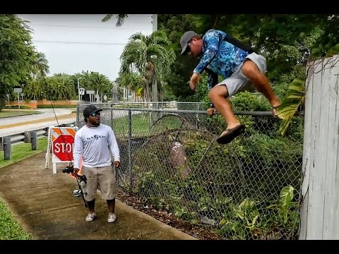No Fishing Zone! Jumping Fences and Getting Chased by BEES in Miami