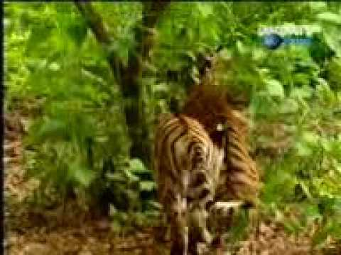 Monkey and lion funny movie - YouTube