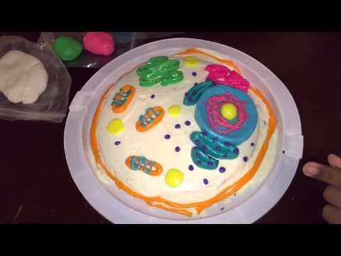 animal cell diagram no labels 92 honda accord lx radio wiring cake - youtube