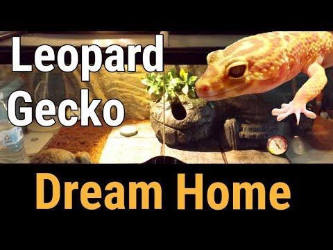 New leopard gecko tank & first time eating crickets