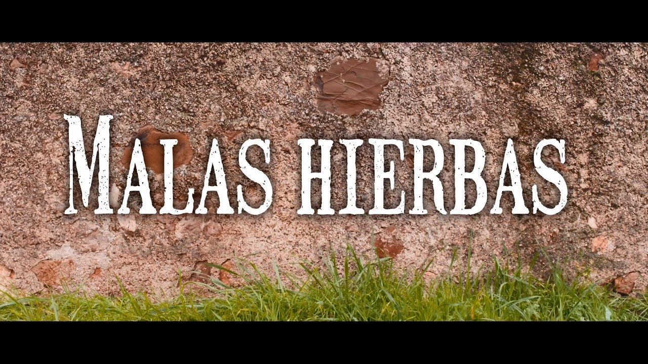 "Cortometraje ""Malas Hierbas"""