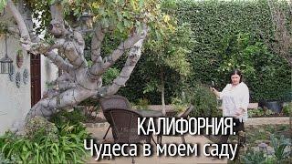 """Калифорния. Лос-Анджелес. Наташа Купер: """"Чудеса в моем саду!"""" [Влиятельный английский]"""